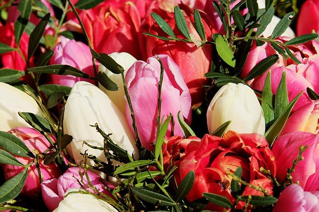 barevné tulipány